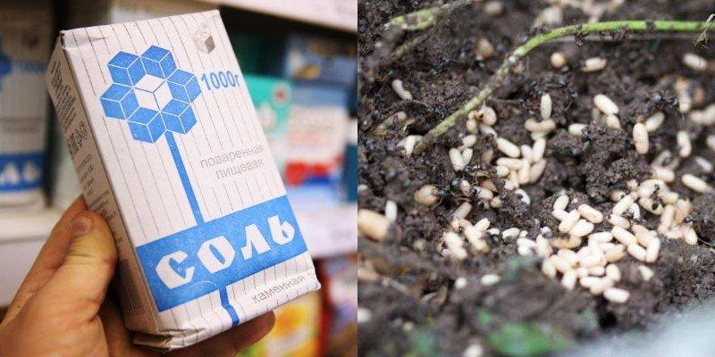 как избавиться от муравьев на газоне