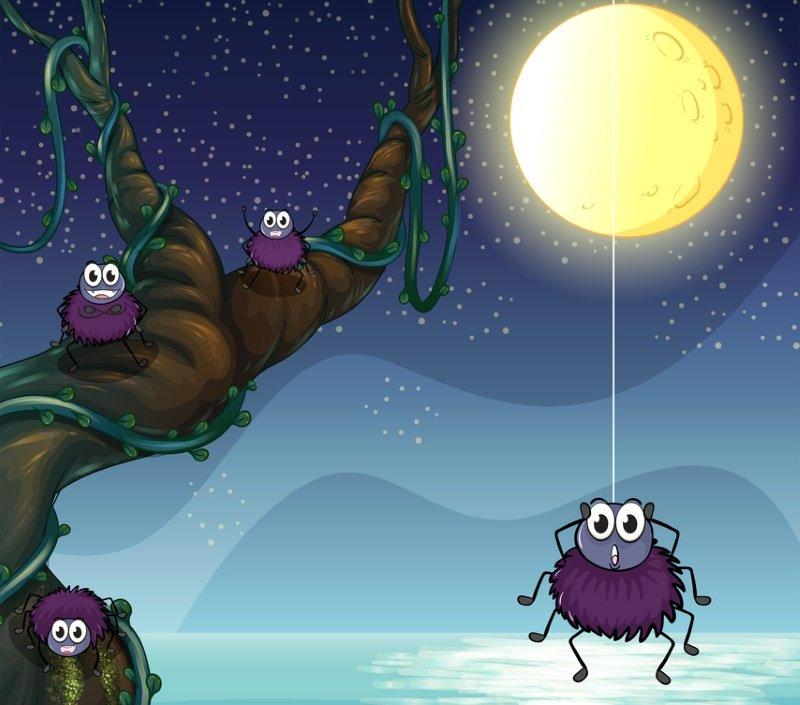 как избавиться от пауков в теплице