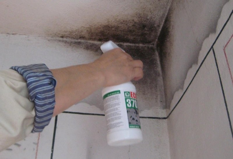 как избавиться от плесени в доме на стенах