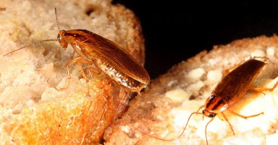 как избавиться от паразитов в животе