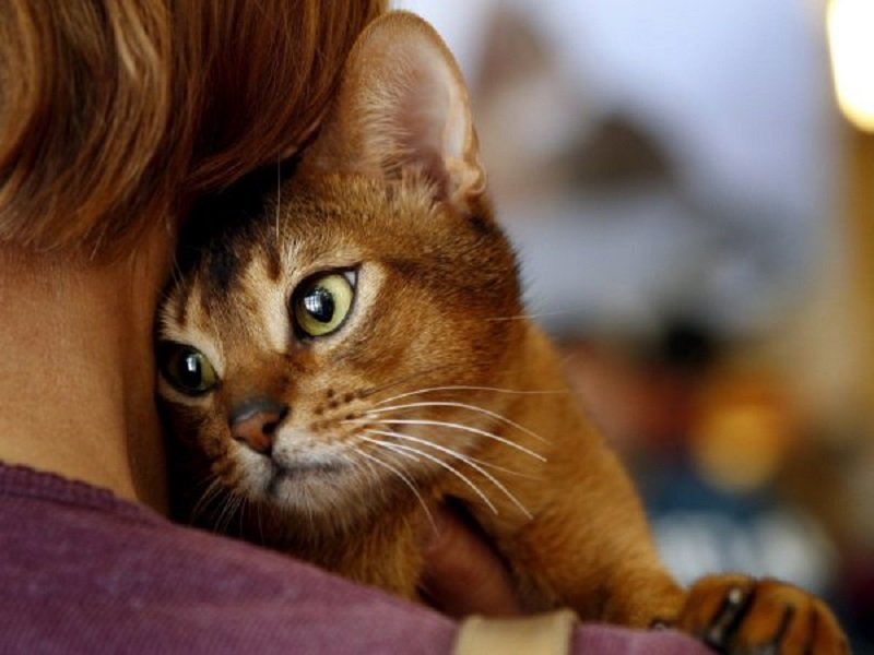кошки лечащие людей