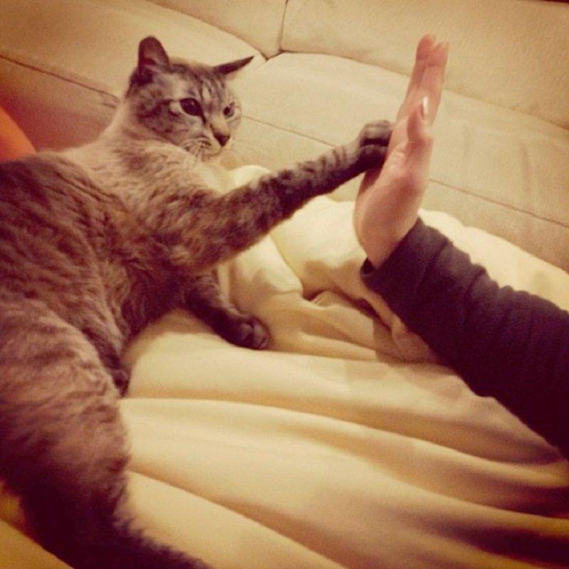 кот с человеком