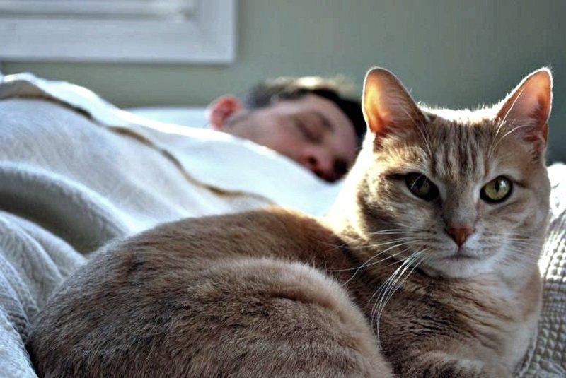 кошки лечат бессонницу