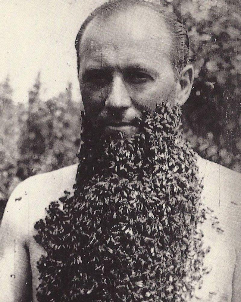 борода из пчел
