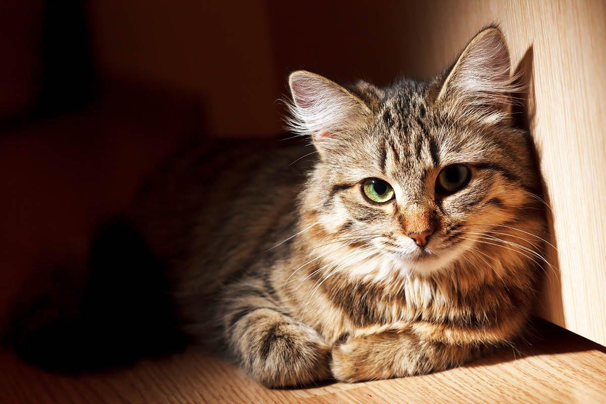 Выбрала коту имя Бегемот, он оказался на деле не так прост, любит разговаривать с родителями и всё понимает