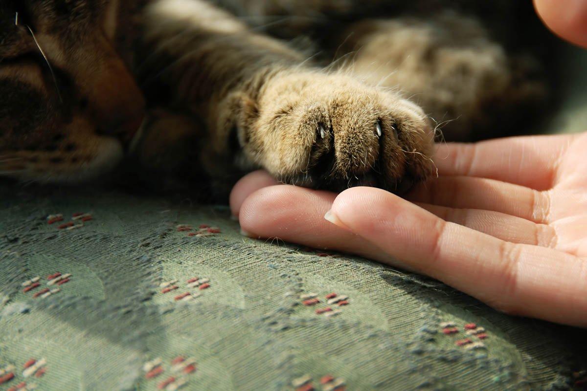 Выбрала коту имя Бегемот, он оказался на деле не так прост, любит разговаривать с родителями и всё понимает имени, можно, назвать, называют, Например, питомцем, котов, любит, котенка, разговаривать, абсолютно, понимает, наших, родителями, Родители, маленькой, всегда, поделилась, оказался, Просто