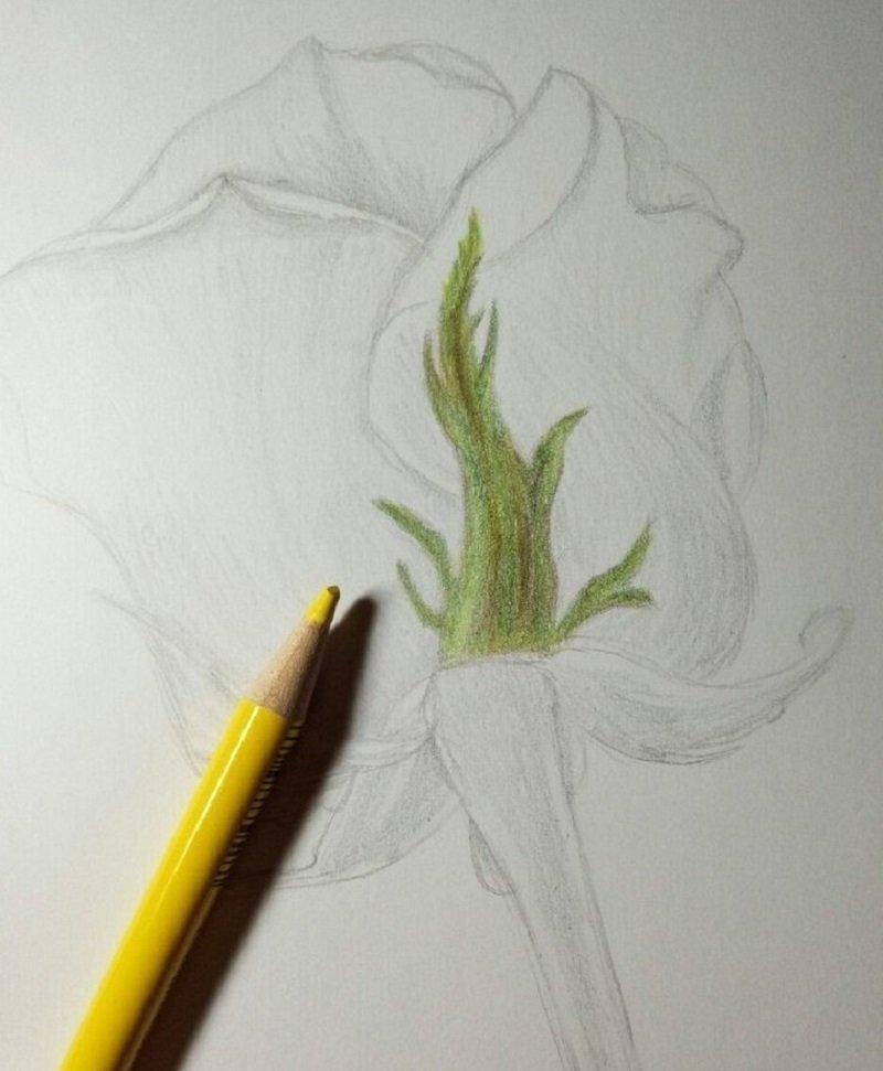 Цветок бабочка Оксалис, или Кислица. Уход в домашних 68