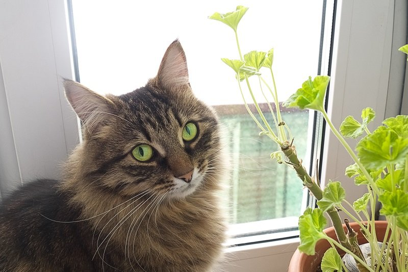 Как найти кота на улице и почему не надо паниковать раньше времени
