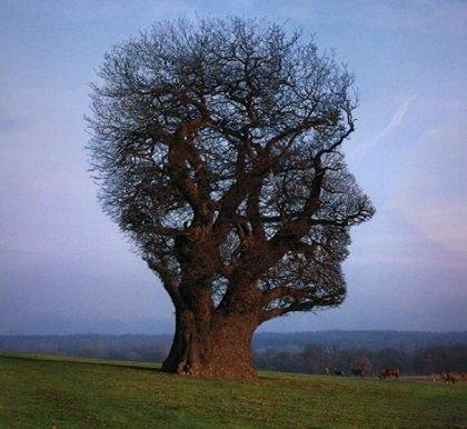 дерево, голова