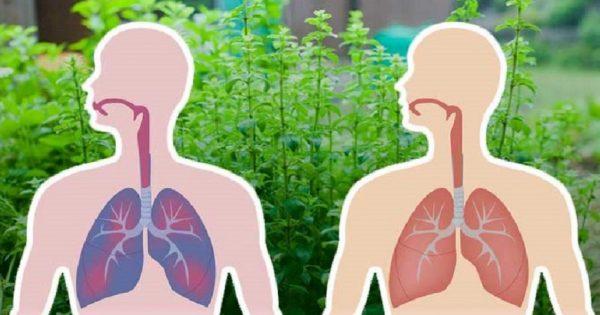 Не спеши покупать антибиотики — попробуй эти травы! Мощнейшие лекарства от матушки-природы.