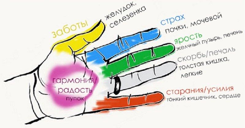 Какому органу соответствует четвертый палец ноги