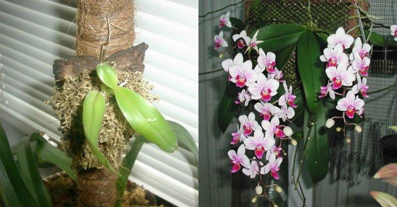 пересадка орхидеи на блок