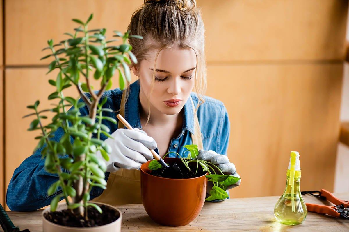 как пересаживать растения