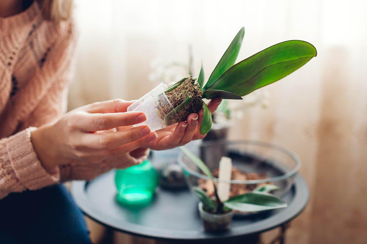 растение в стакане