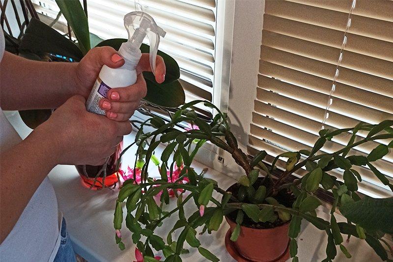 Почему растения чахнут и как им помочь Советы,Вазоны,Дача,Дом,Растения,Садоводство,Уход,Цветы