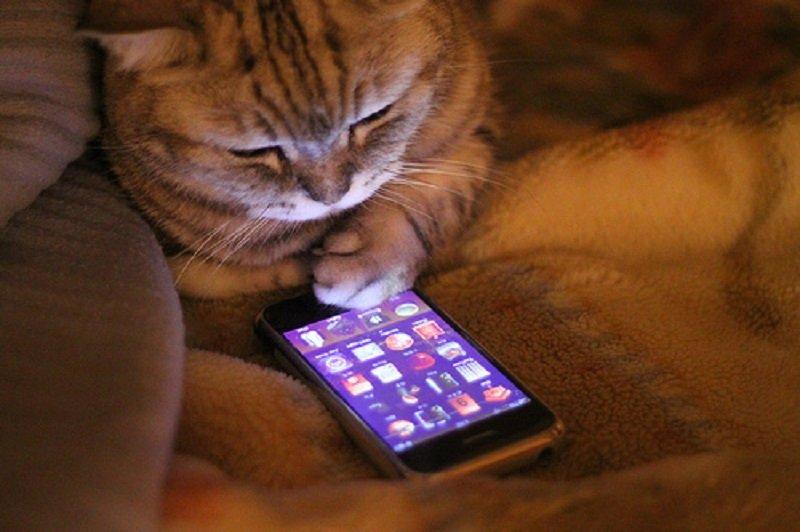 вредно ли спать с мобильным телефоном