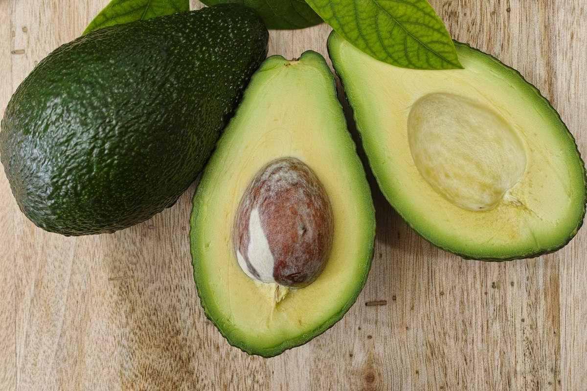 Инструкция по выращиванию авокадо из косточки