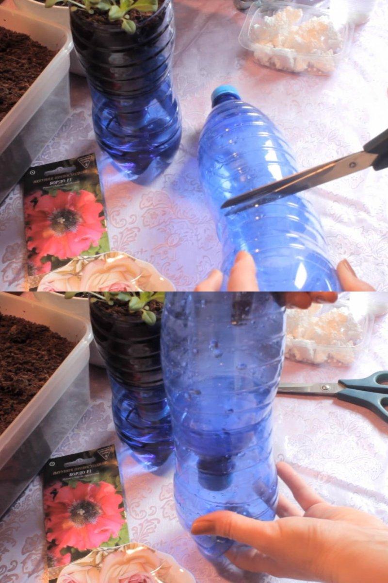 как правильно посадить петунию в гранулах