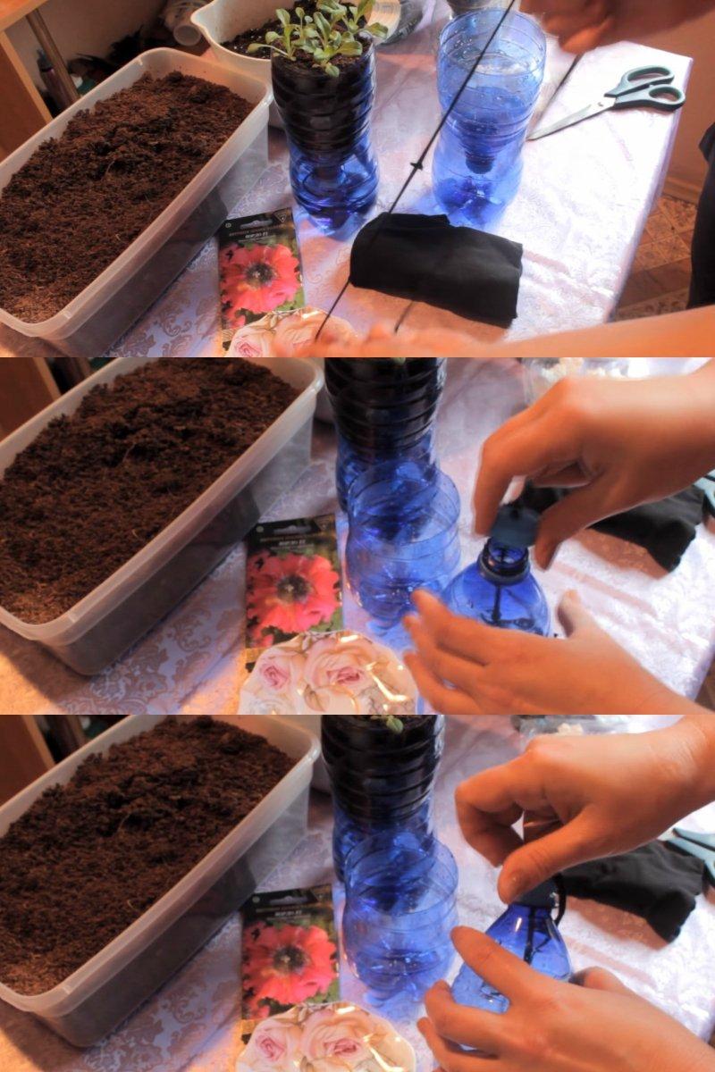 как правильно посадить петунию на балконе