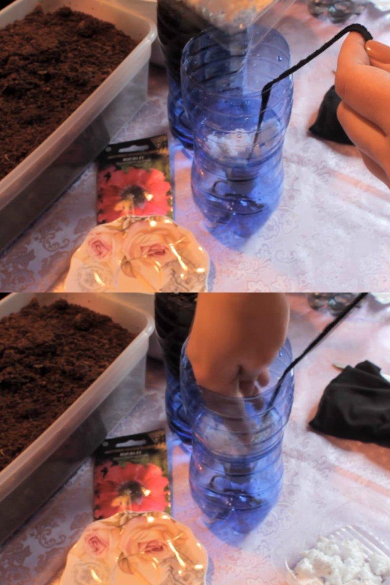 как правильно посадить петунию в грунт