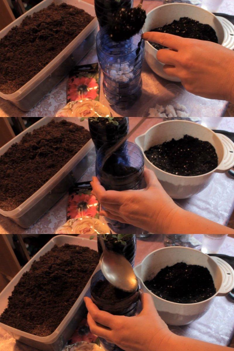 как правильно сажать петунию в домашних условиях