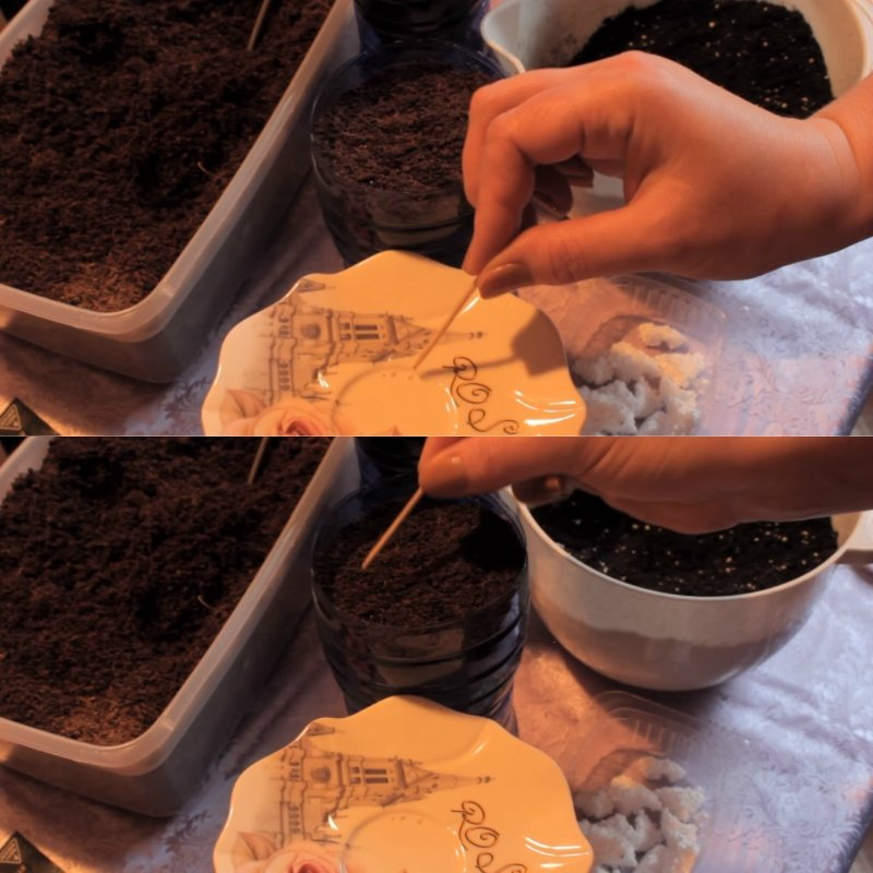 как правильно посадить петунию дома
