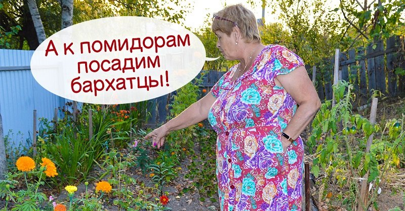 Почему бывает полезно потеснить томаты и посадить к ним соседей снизу
