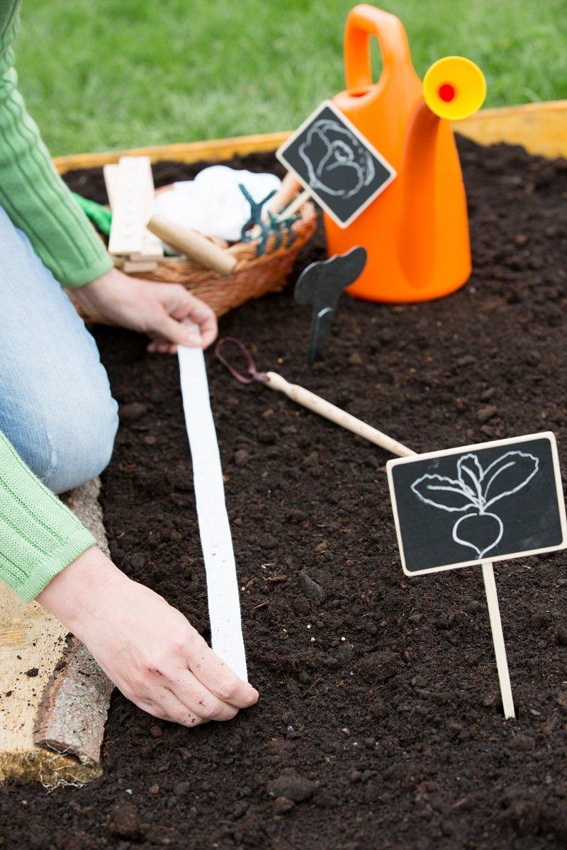 как сеять морковь