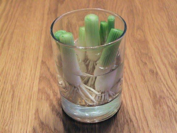 зеленый лук в стакане