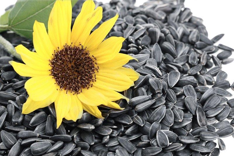 Как проращивать семена и зерна