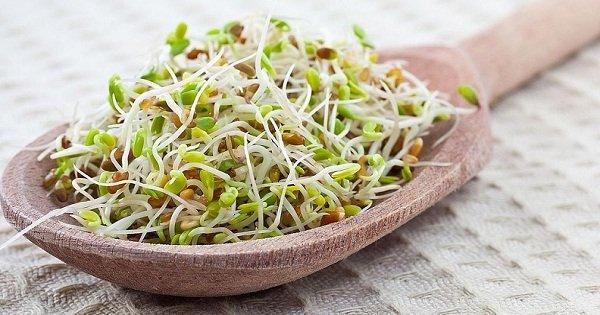 Как проращивать семена и зерна: сохрани их энергетический потенциал для своего здоровья!