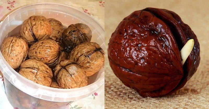 как прорастить грецкий орех в домашних условиях