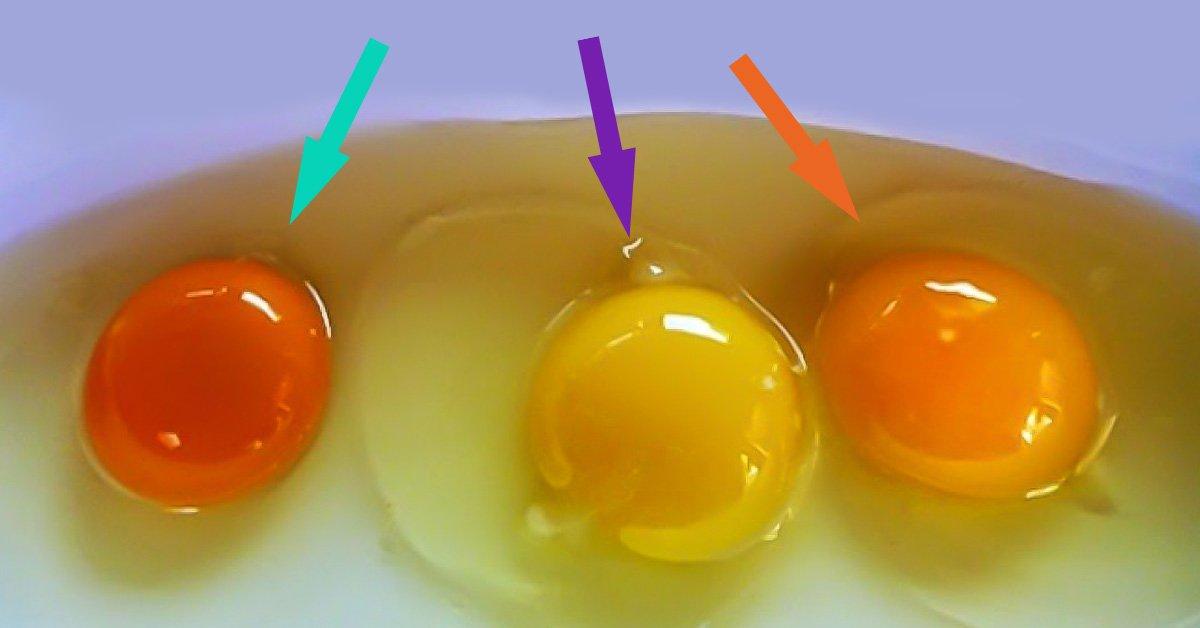 Цвет скорлупы куриных яиц