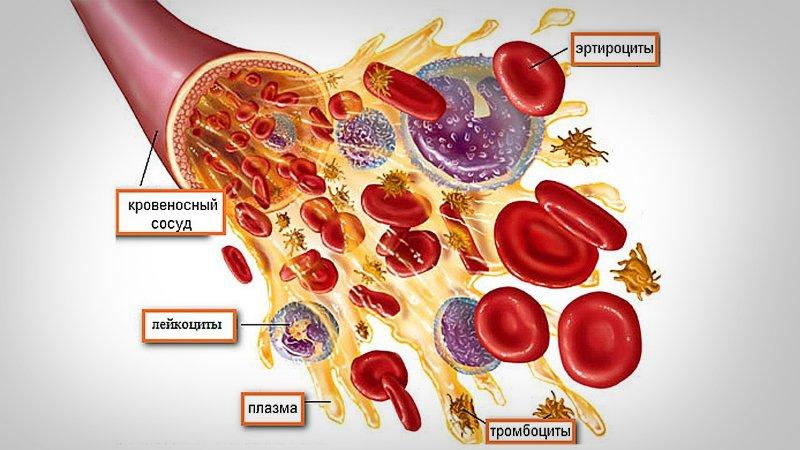 как расшифровать анализ крови