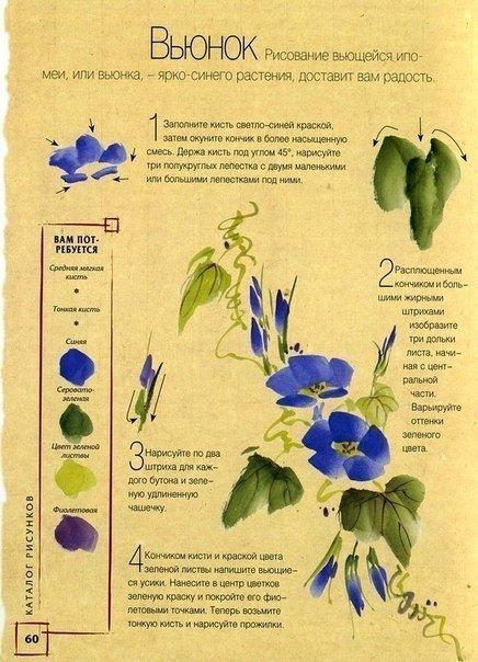 рисунок вьющегося растения