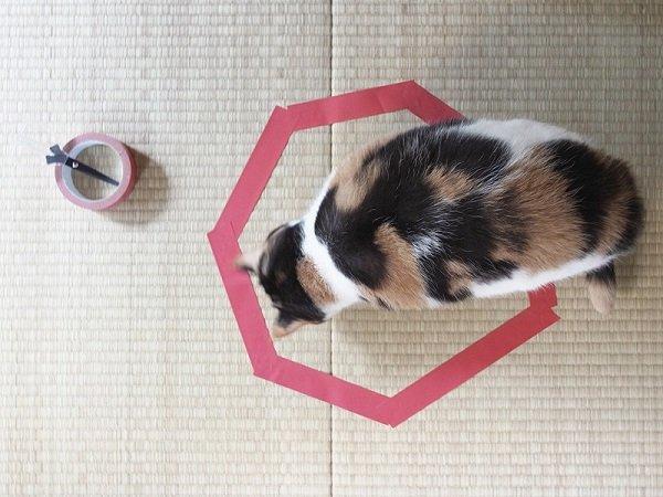 кот и кот