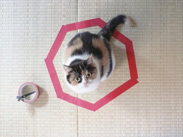 кот на коврике