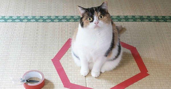 Пошаговая инструкция ловушки для кота. Я проверил на своем Пушистике — это работает!