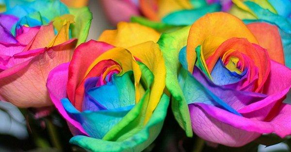 Великолепная идея для подарка любимым! Сделай такие радужные розы своими руками.