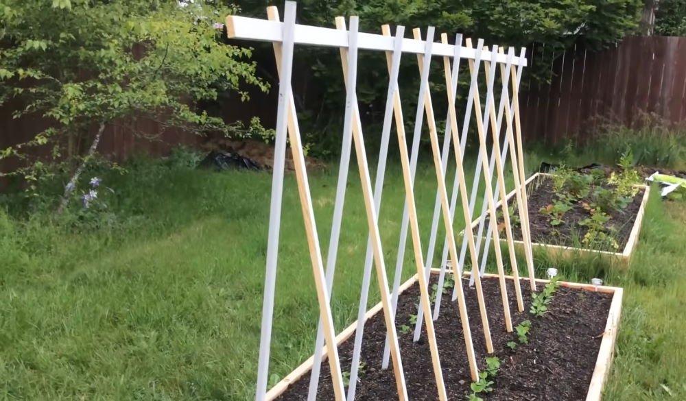 как подвязать горох в огороде