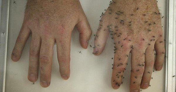 Домашнее средство от комаров своими руками