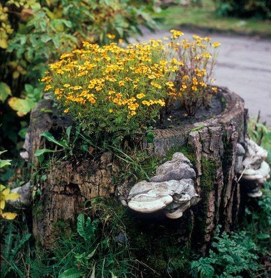 грибы на пне