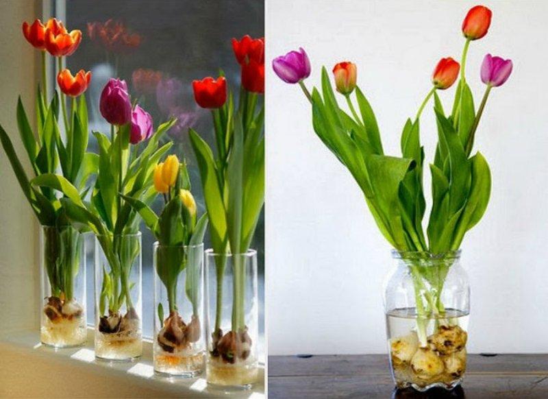 луковичные цветы в вазе