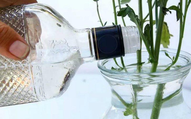 консервант для цветов в вазе