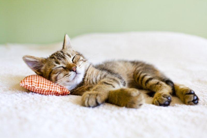 как стирать подушки в стиральной машине
