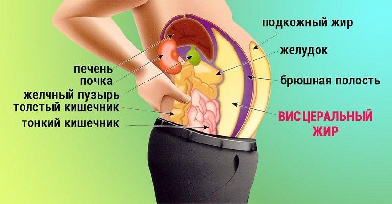 висцеральный жир как убрать