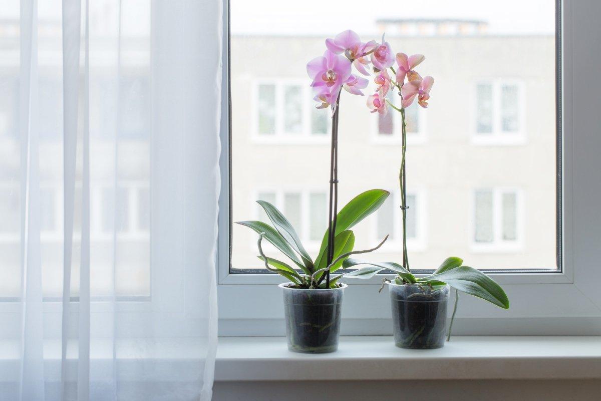 Что подложить в купленную орхидею, чтобы зацвела бешено