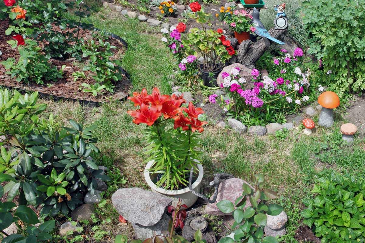 Как ухаживать за лилиями после цветения: правила для садоводов