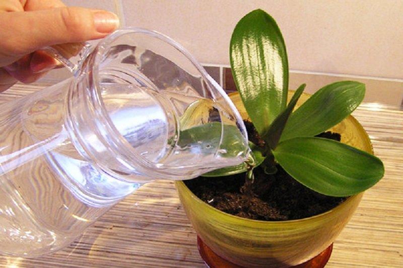 орхидея уход в домашних условиях зимой