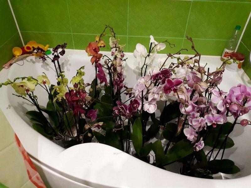Как ухаживать за орхидеями в домашних условиях  163